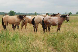 Equine - Double JB Feeds