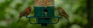 Double JB Feeds - Bird Feeders and Bird Seed