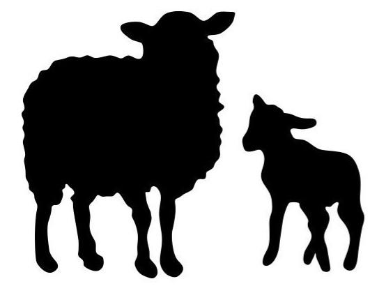 Sheep/ Ewe Supplies - Double JB Feeds