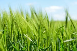 Lawn, Crop, and Pasture Seed - Double JB Feeds
